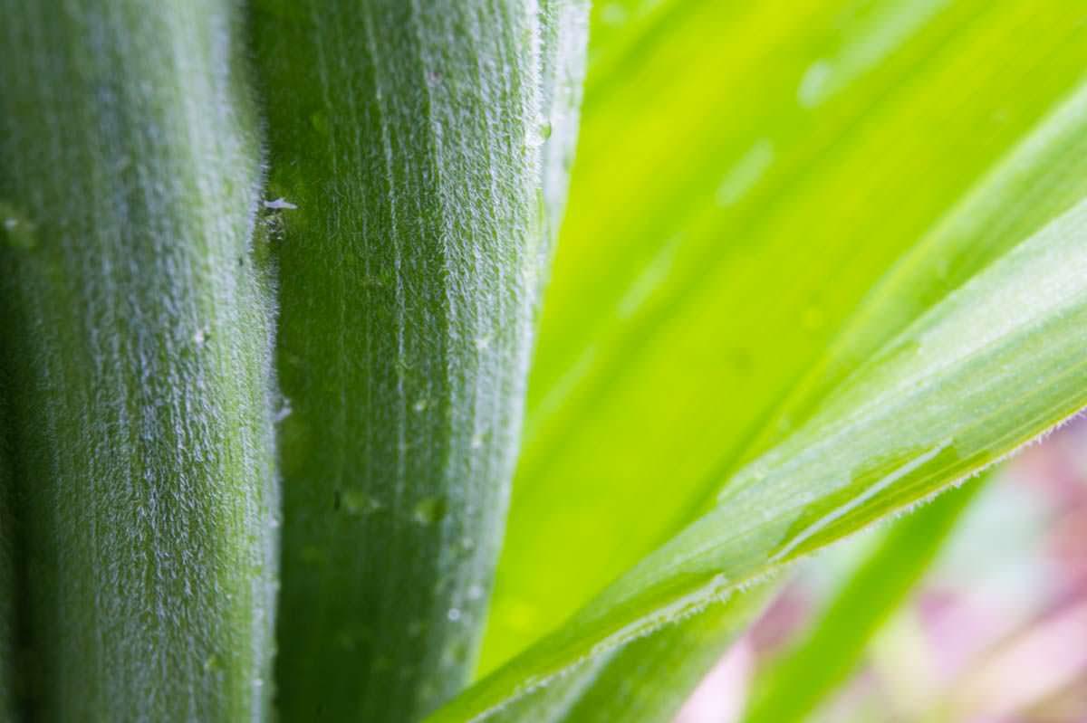 Grünpflanze im Allgäu
