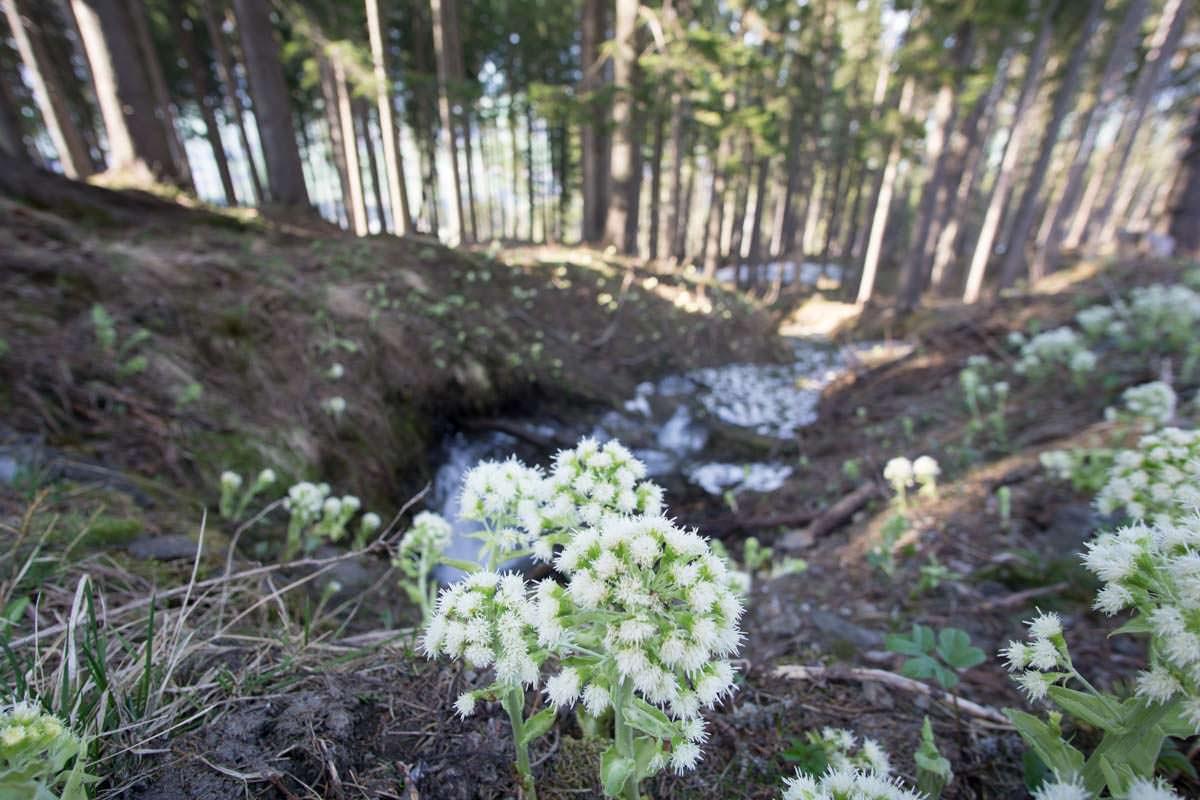 Auf der Wanderung zum Alpspitz passieren wir einen Wald
