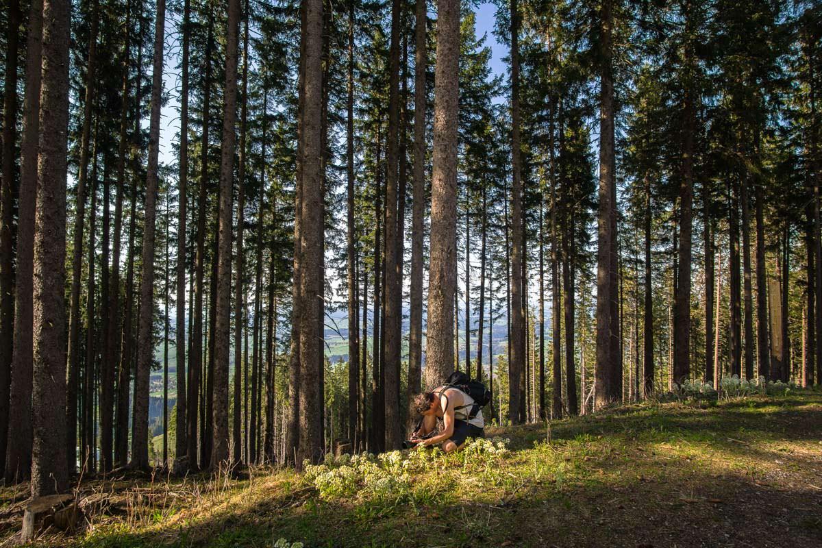 Sonnenstrahlen scheinen auf eine Waldlichtung