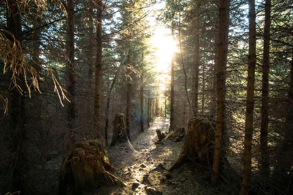 Waldlichtung im Allgäu