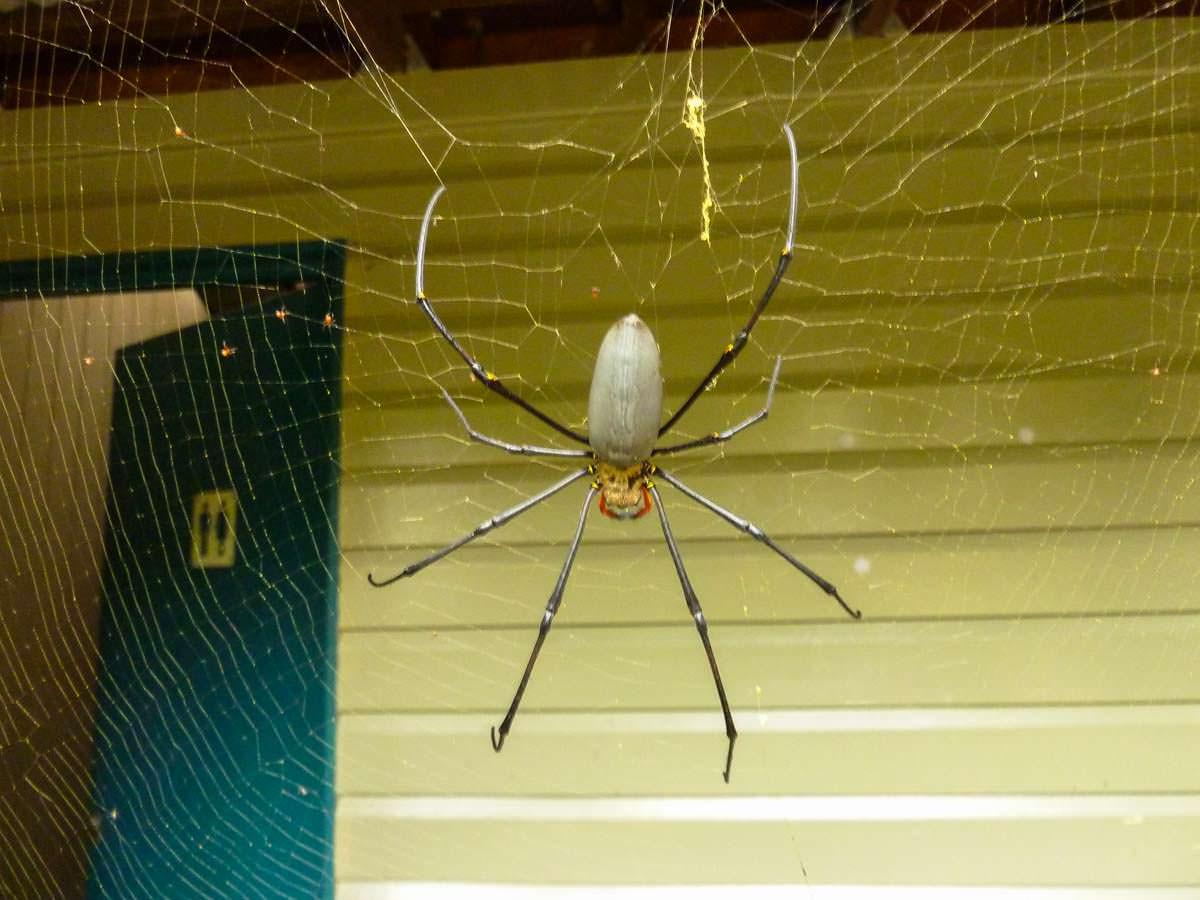 Spinne vor Waschhaus auf einem australischen Campingplatz