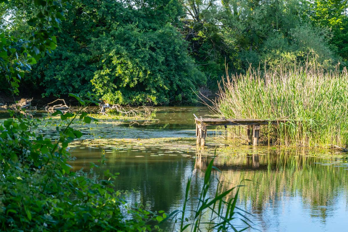 Altwasser der Schussen im Eriskicher Ried