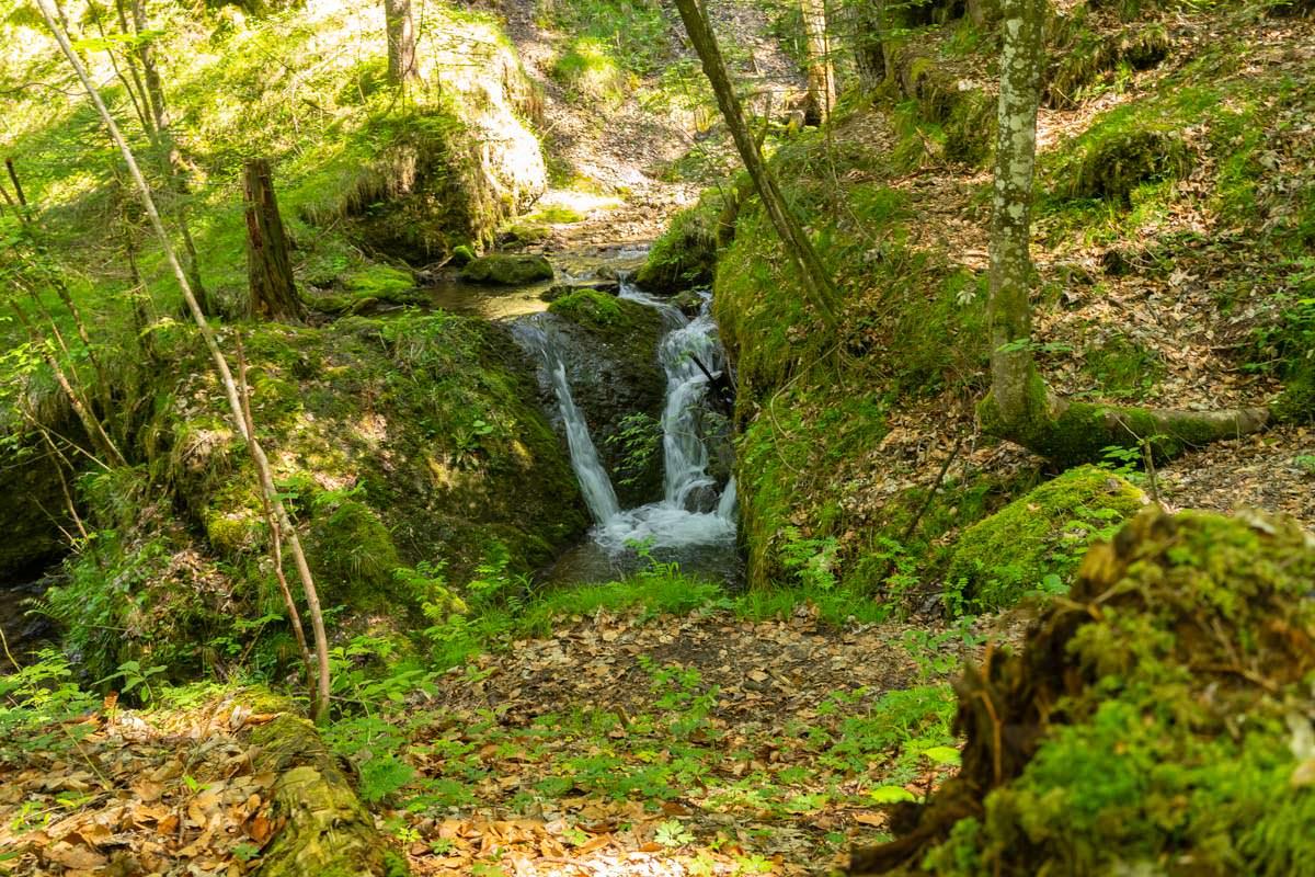 Die Wanderung führt durch eine grüne Klamm am Hinanger Bach entlang